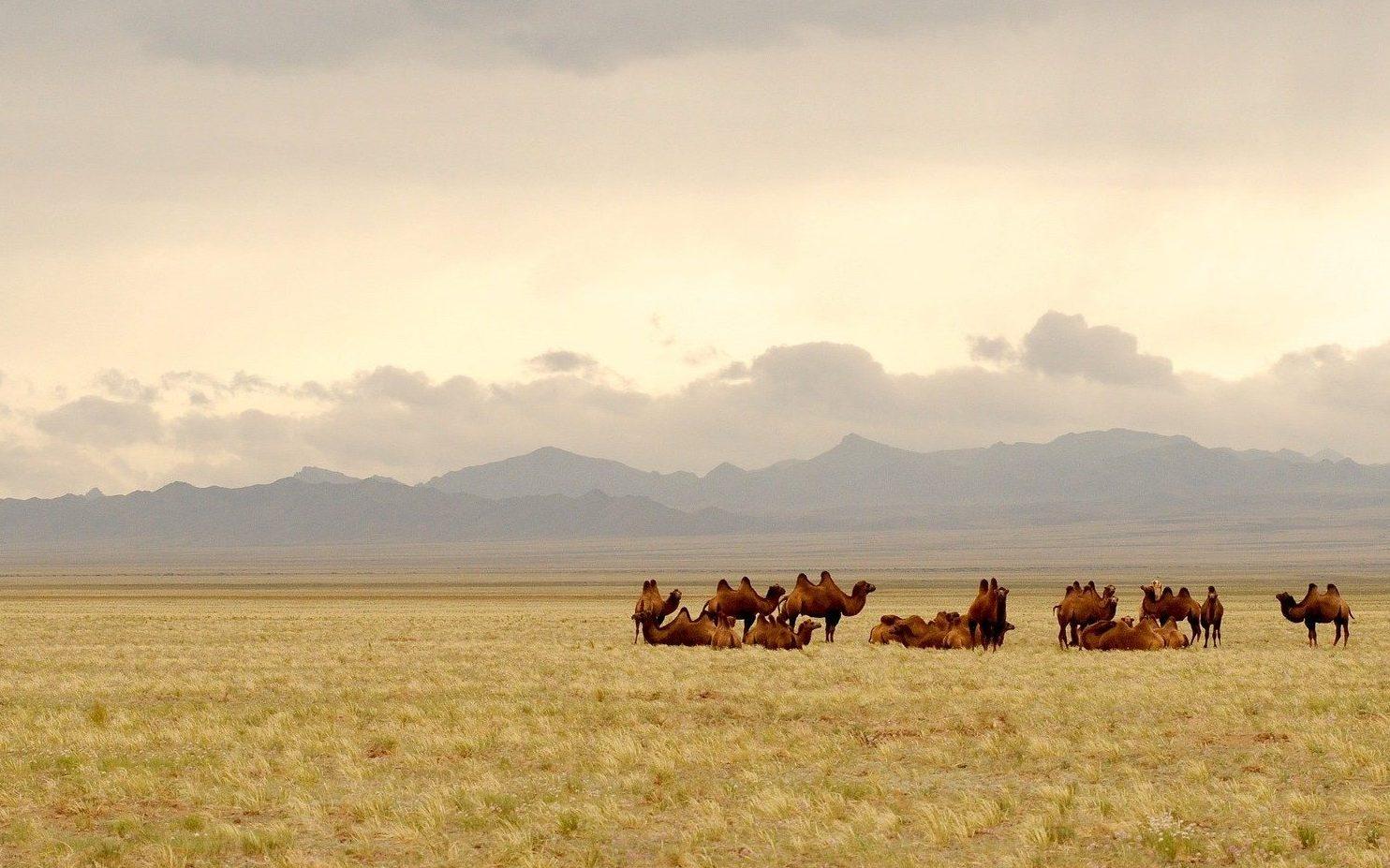 Mongolia cosa vedere in 10 giorni