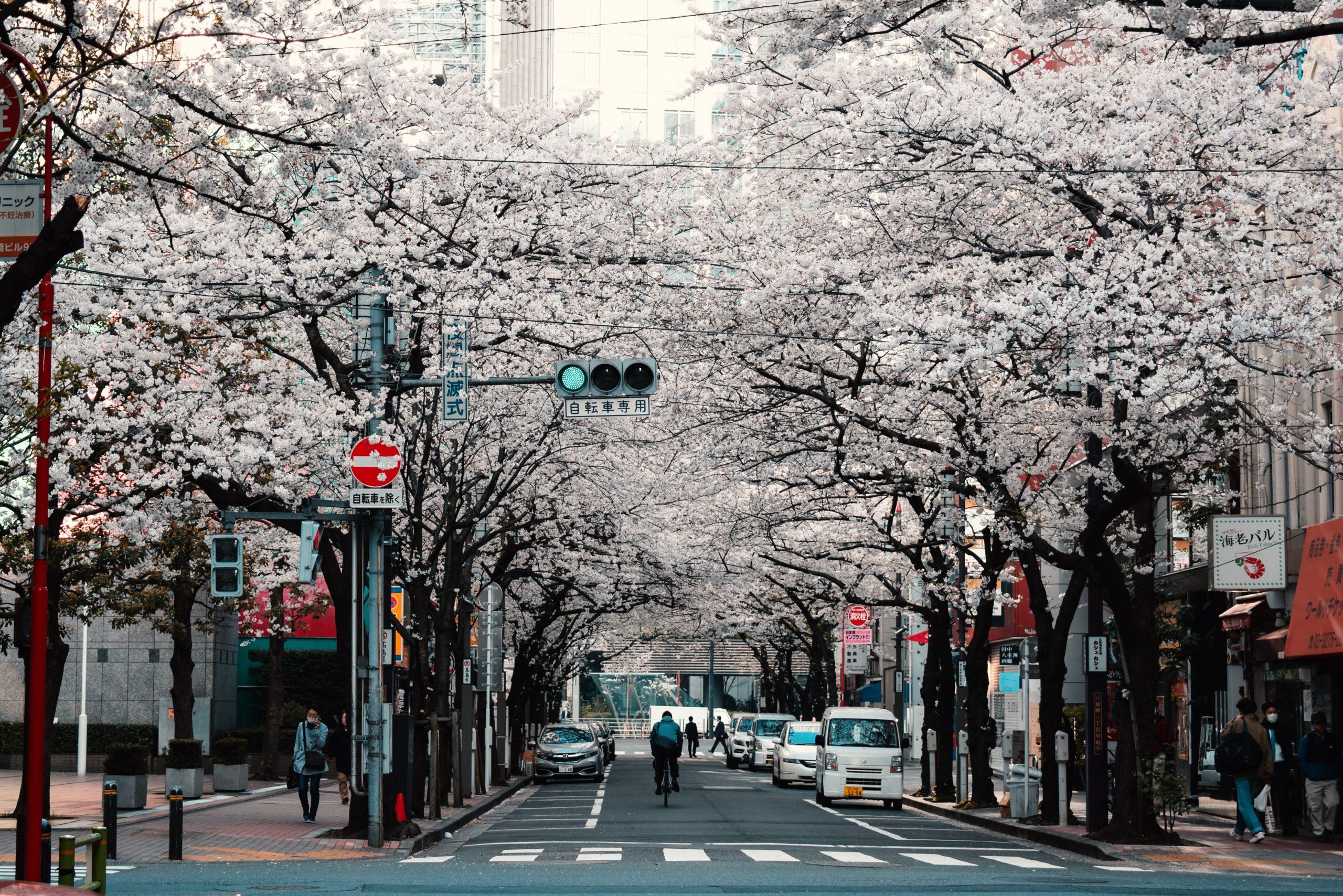 Tokyo cosa vedere in 4 giorni