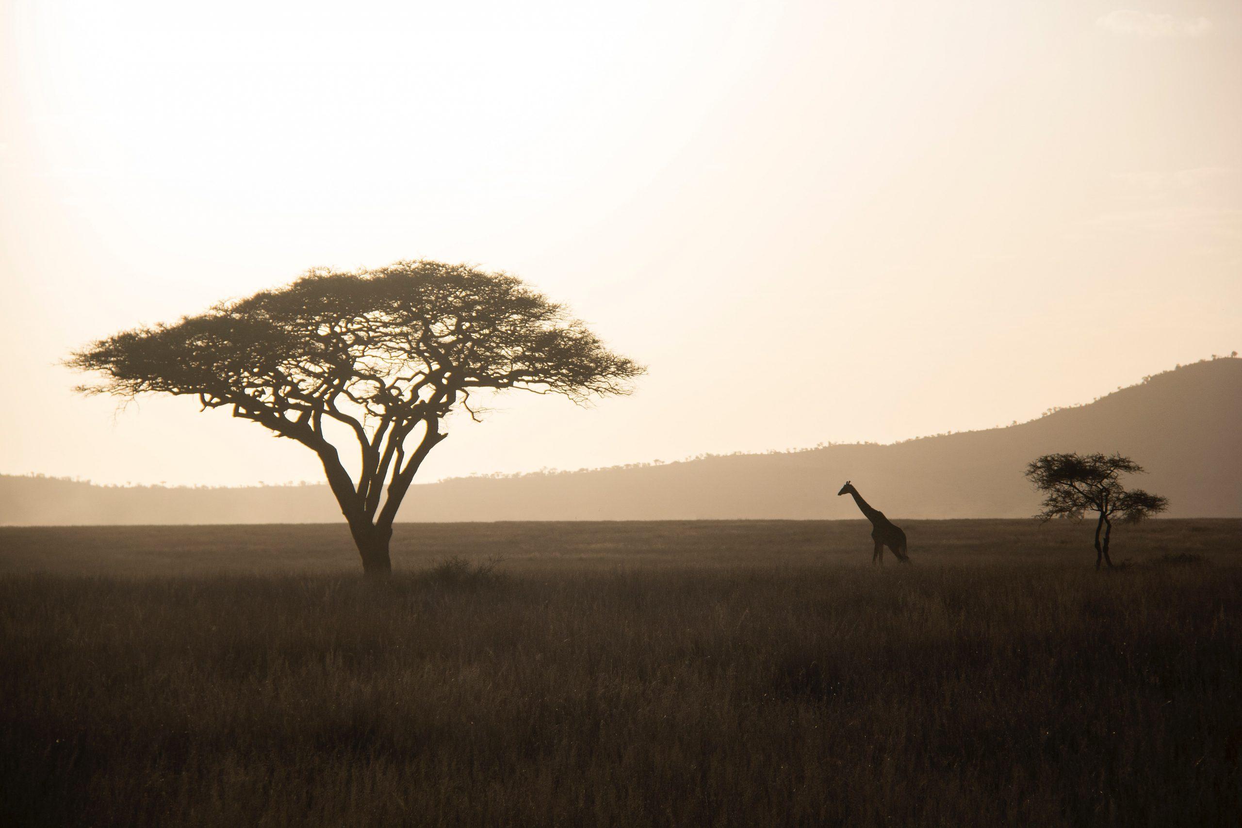Vaccini viaggio Africa