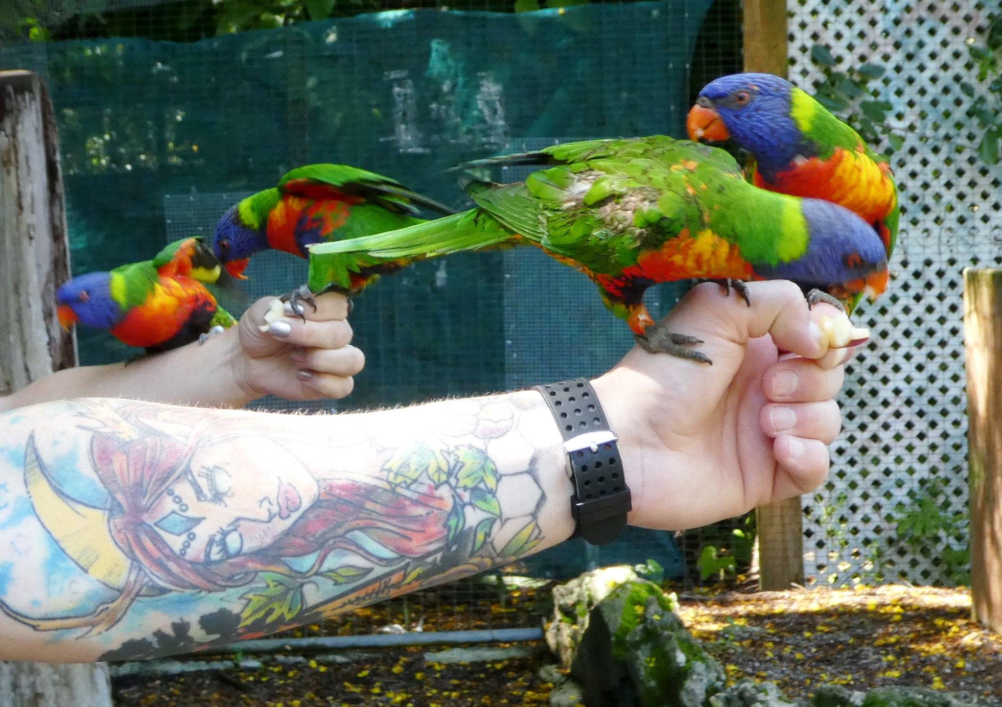 Ardastra Gardens & Zoo