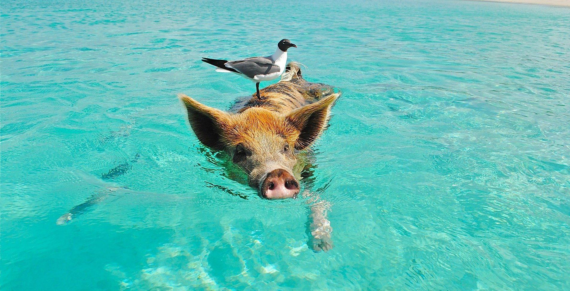 bahamas dove andare con i bambini