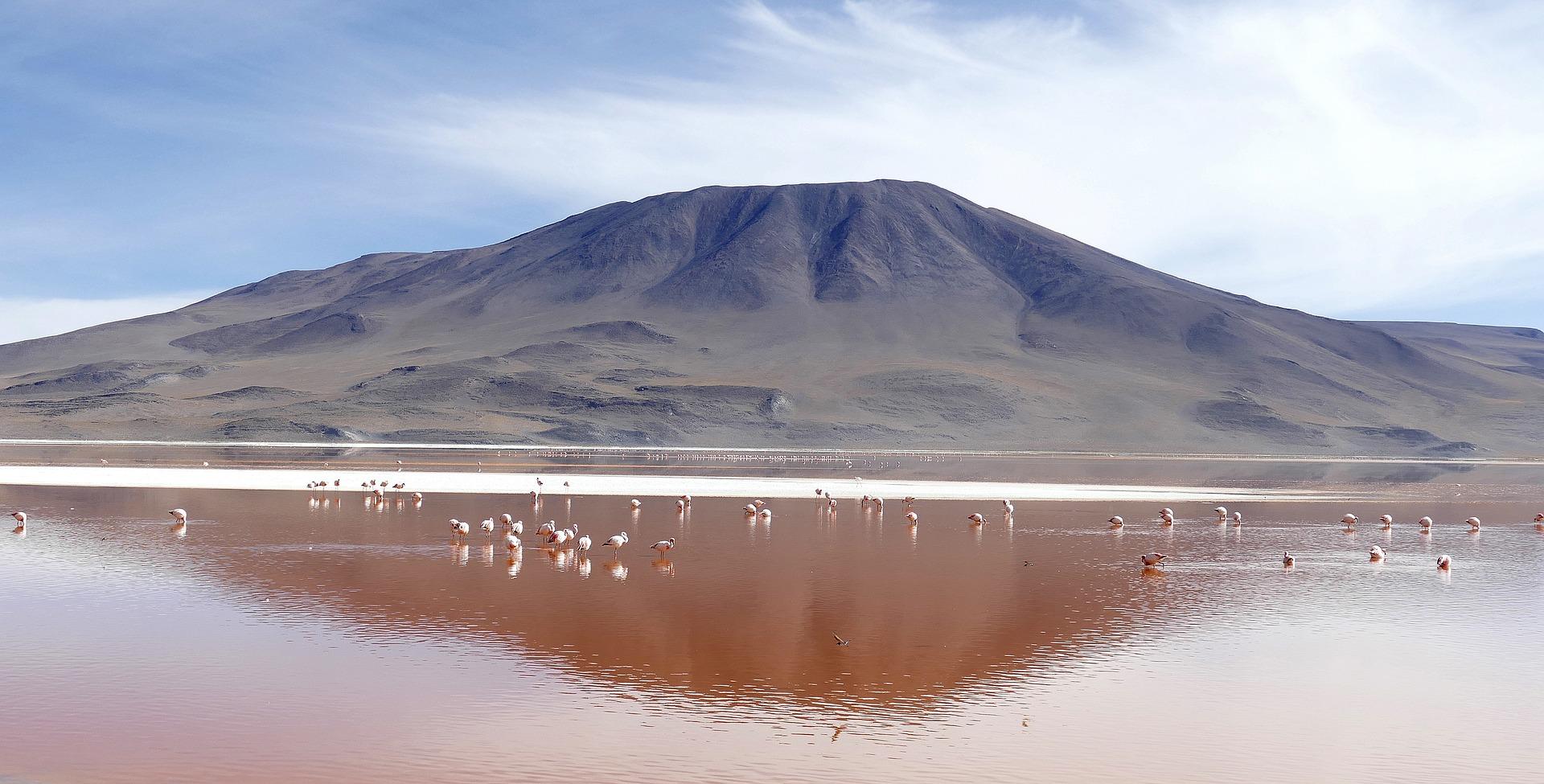 Laguna colorada in Bolivia colori e curiosità