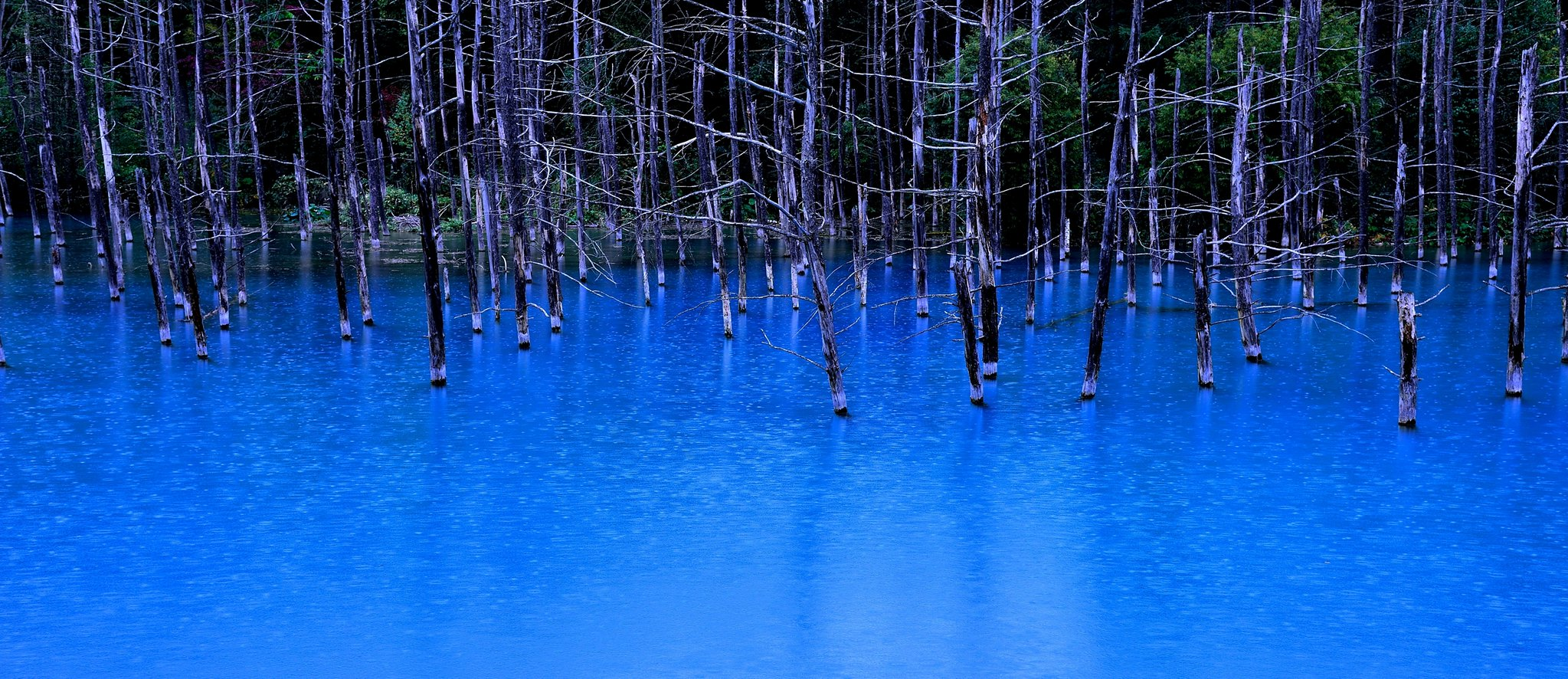 stagno blu