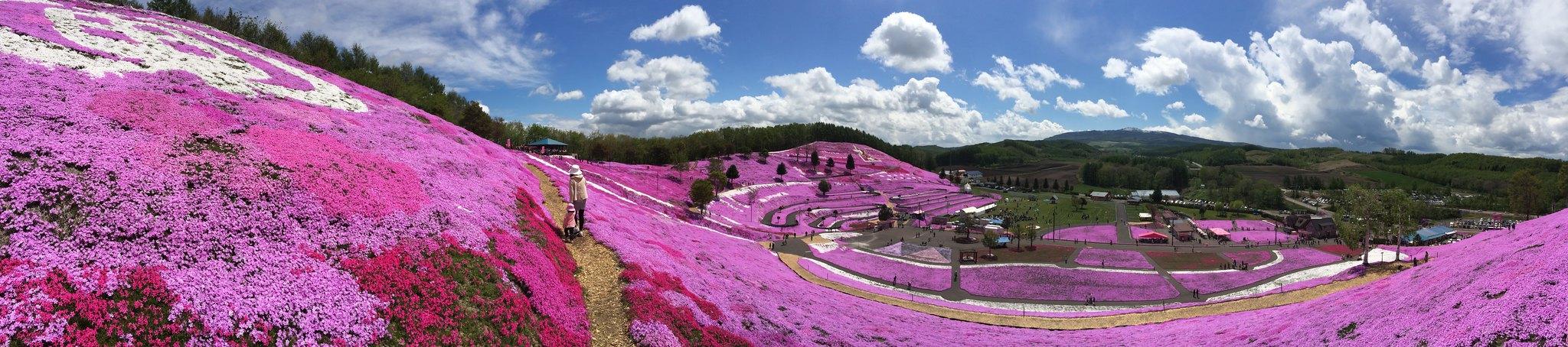 collina rosa