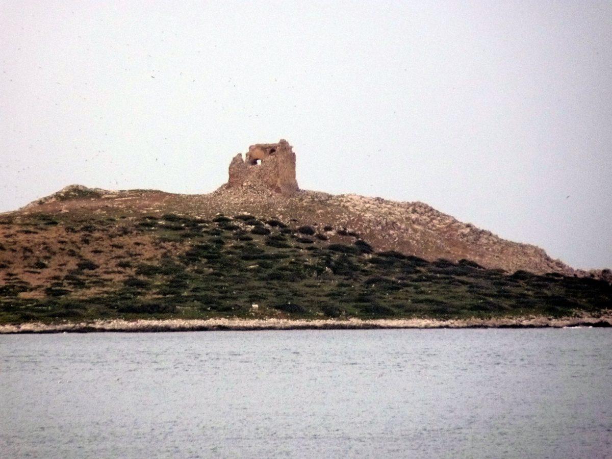 torre isola femmine