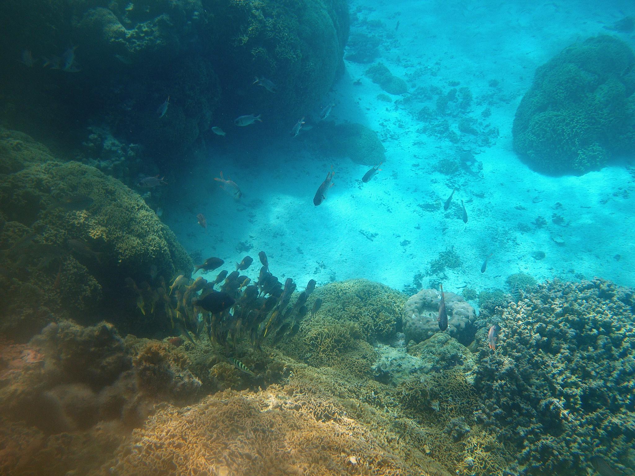 barriera corallina polinesia francese