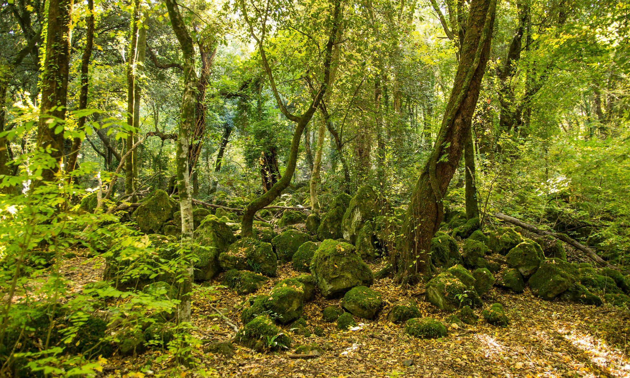 bosco del sasseto, acquapendente