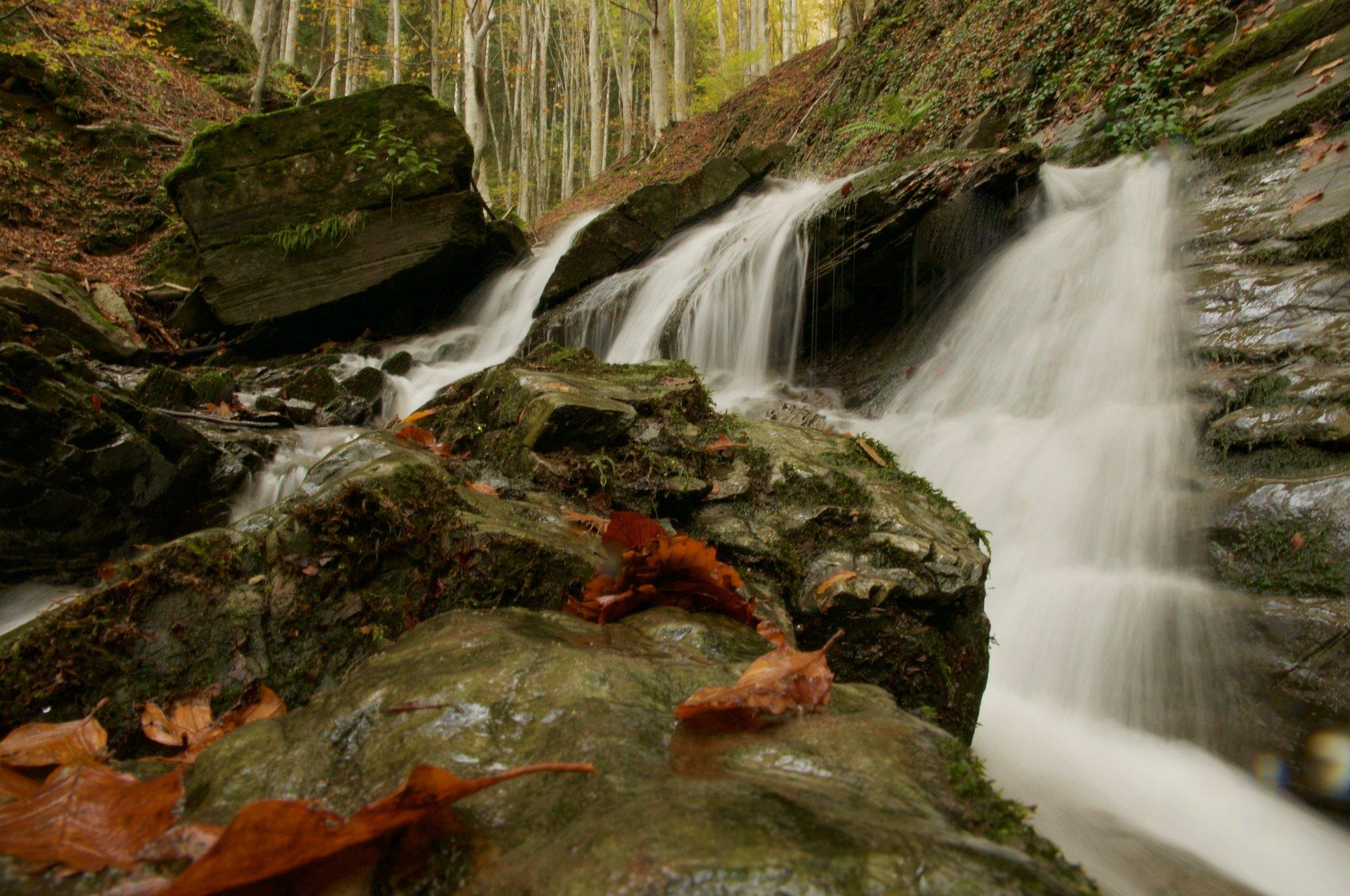 foreste casentinesi dove si trovano