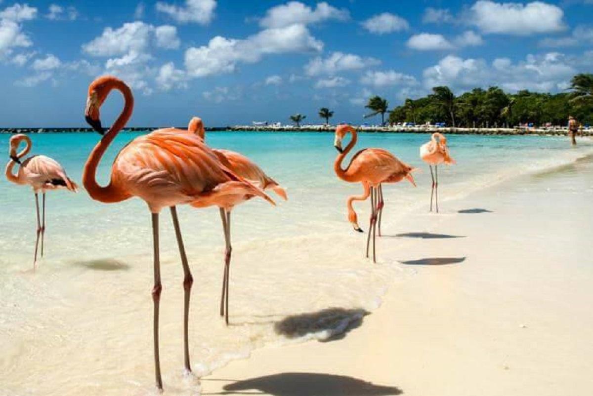 isola della felicità aruba