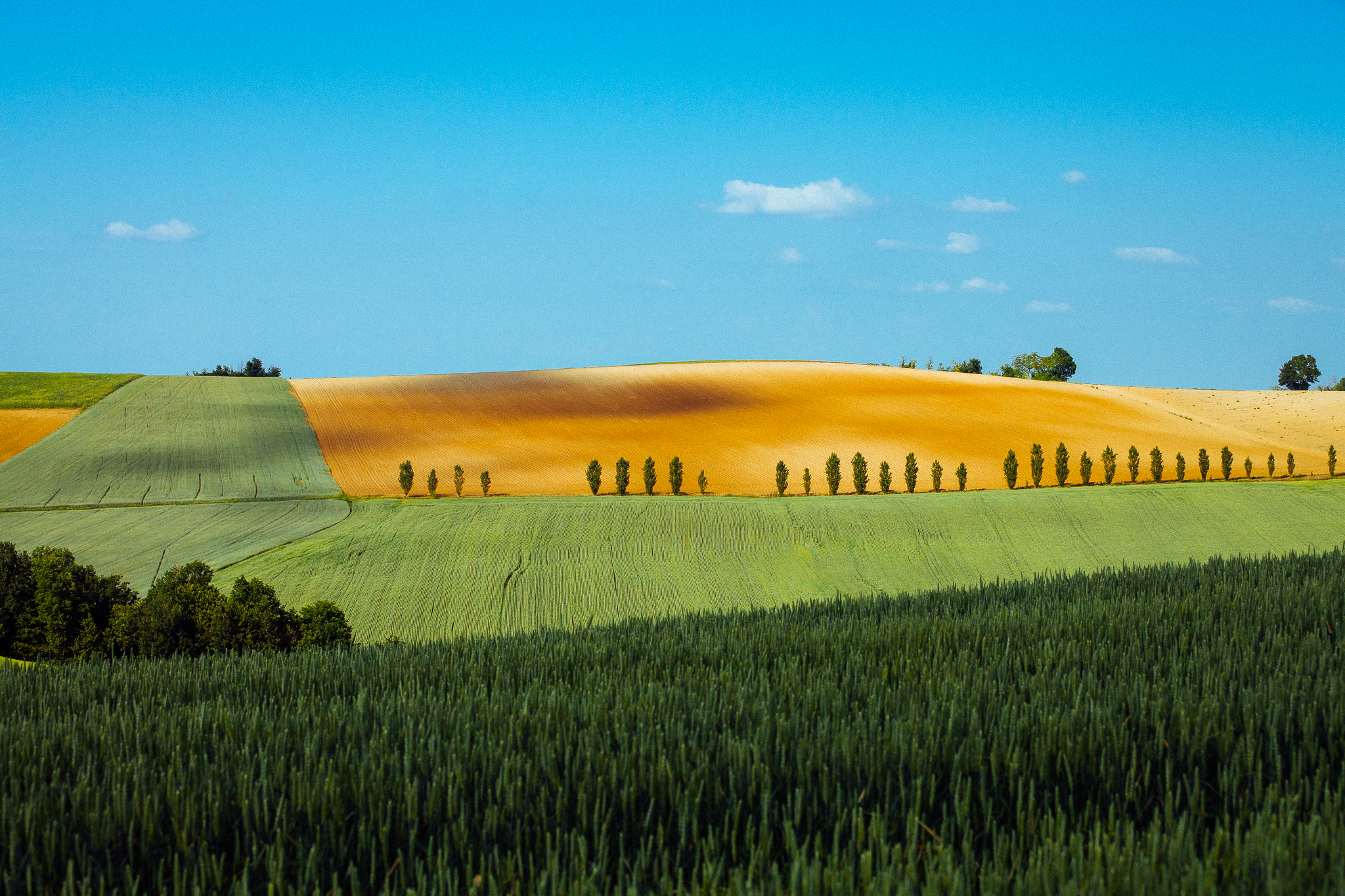 Langhe Roero Monferrato Unesco