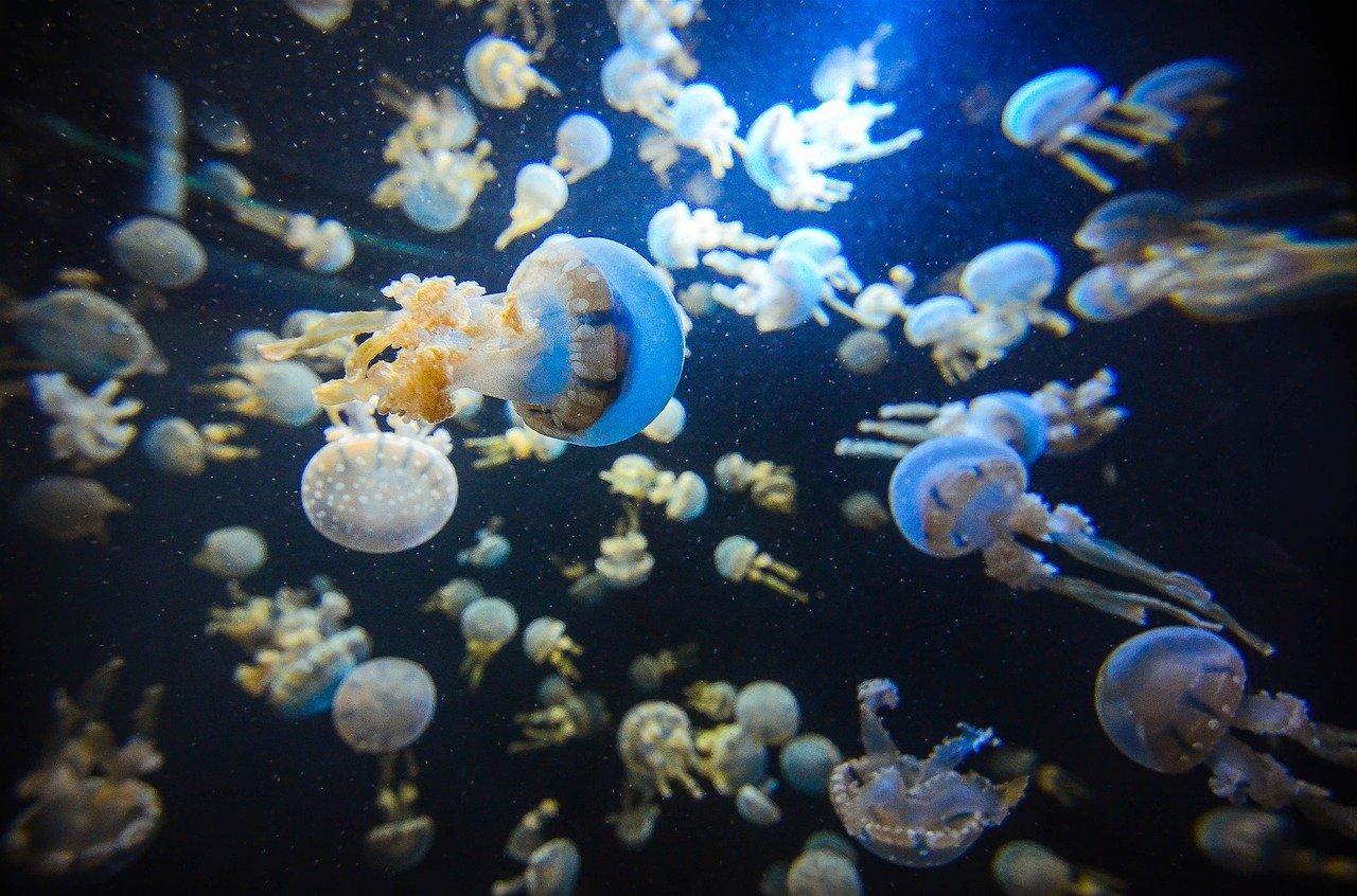 singapore acquario più grande del mondo
