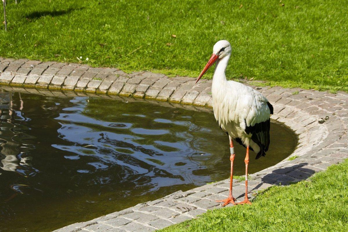 stork-