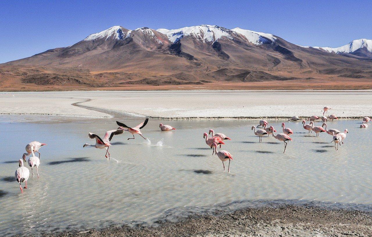 tour lagune bolivia