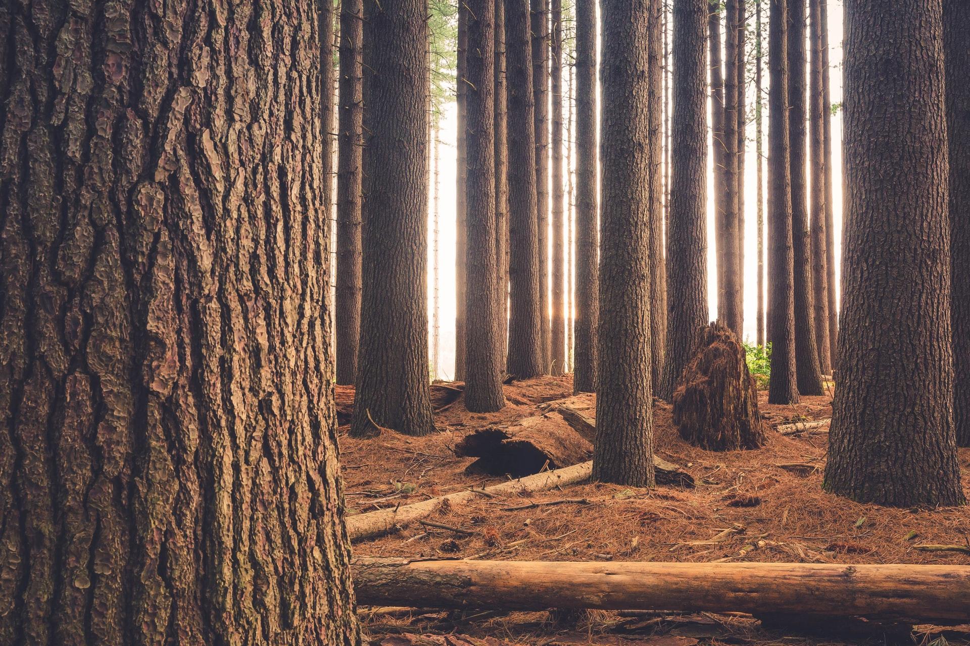 boschi da visitare in lombardia