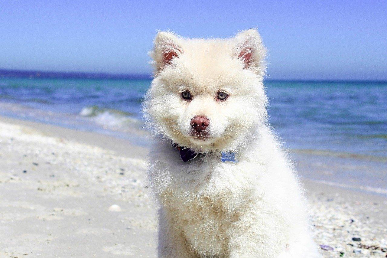 cannes spiagge per cani