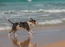 gabicce spiagge per cani