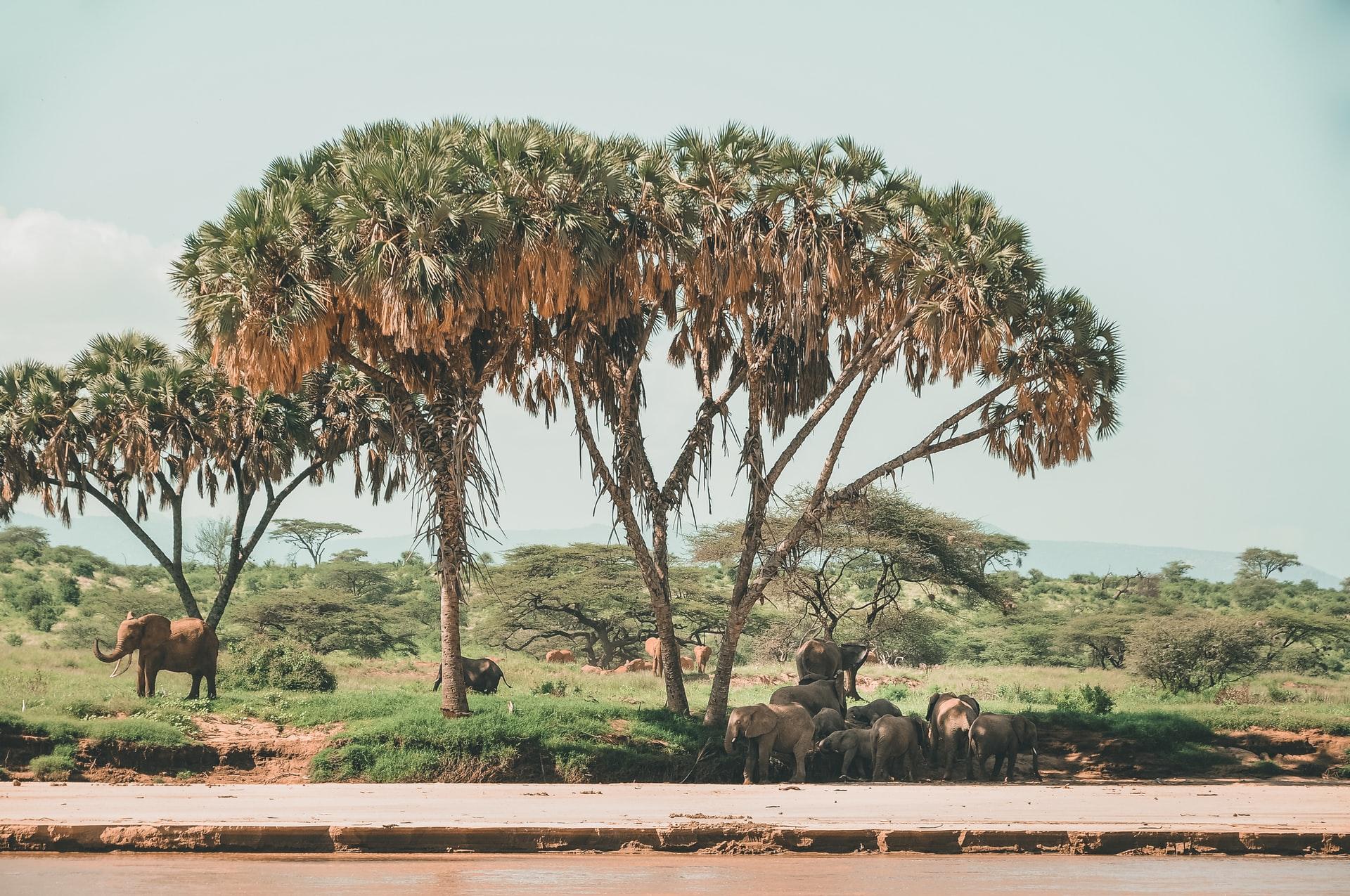 Riserva nazionale Samburu