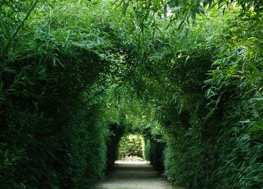 Labirinto bamboo
