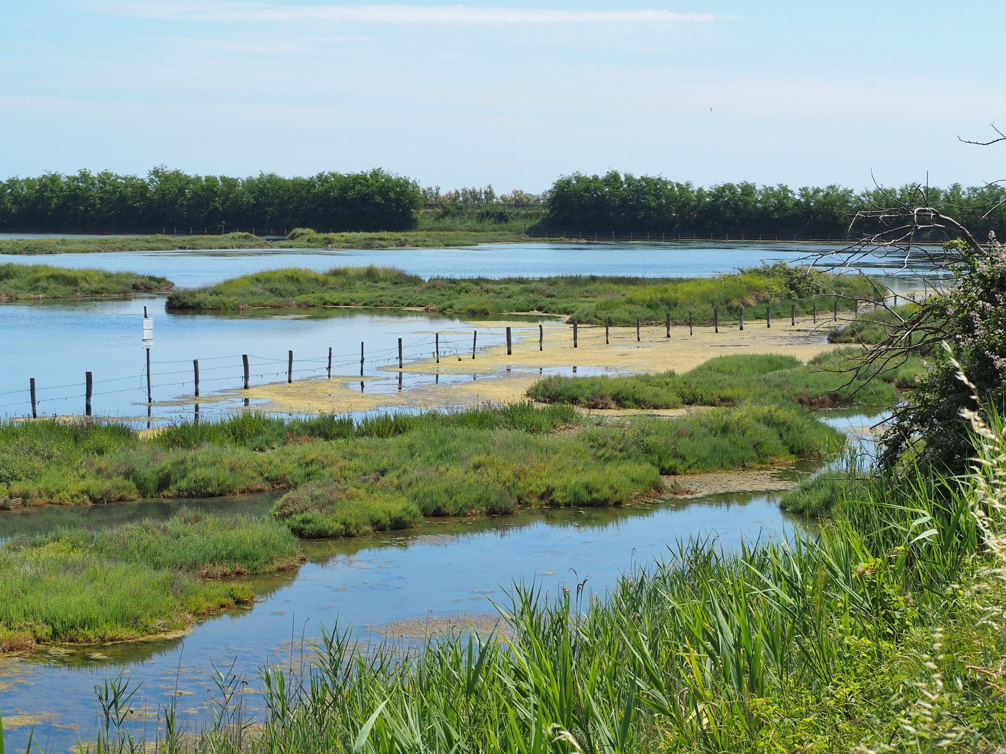 parco regionale veneto del delta del po cosa vedere