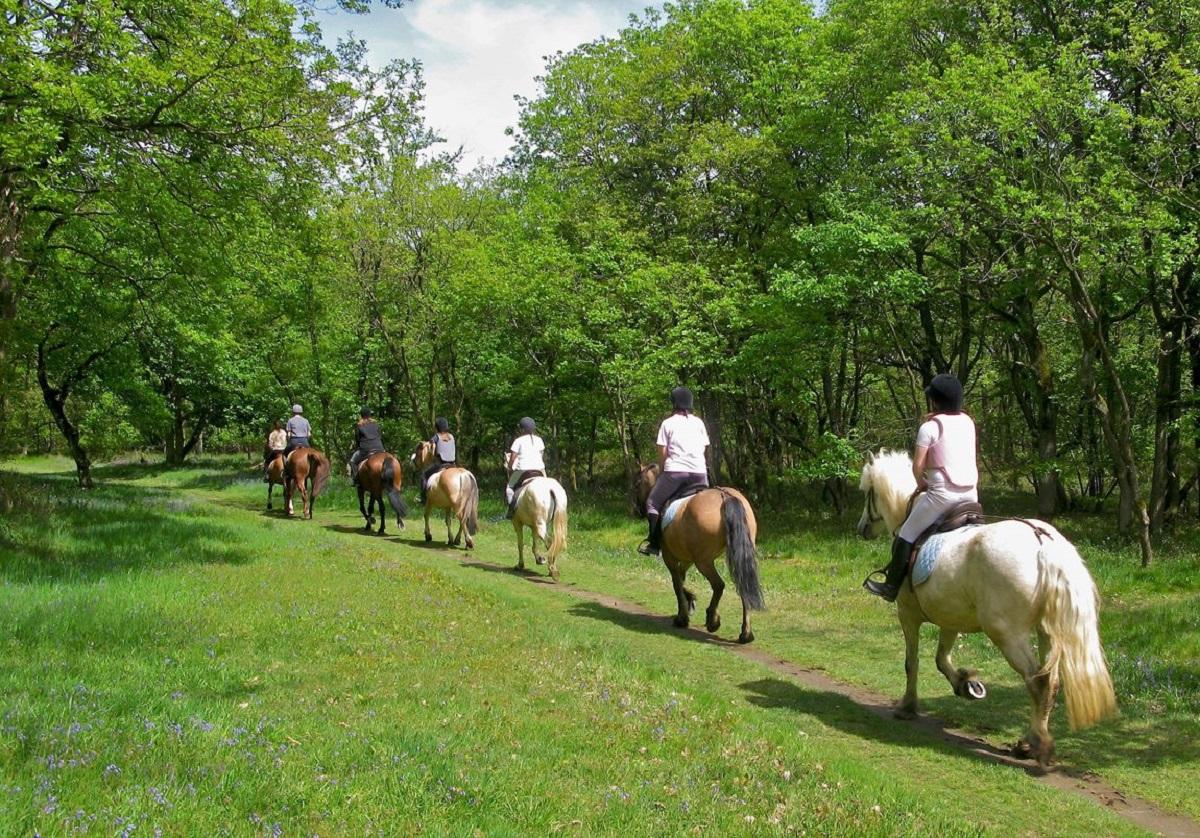 passeggiata a cavallo foresta umbra