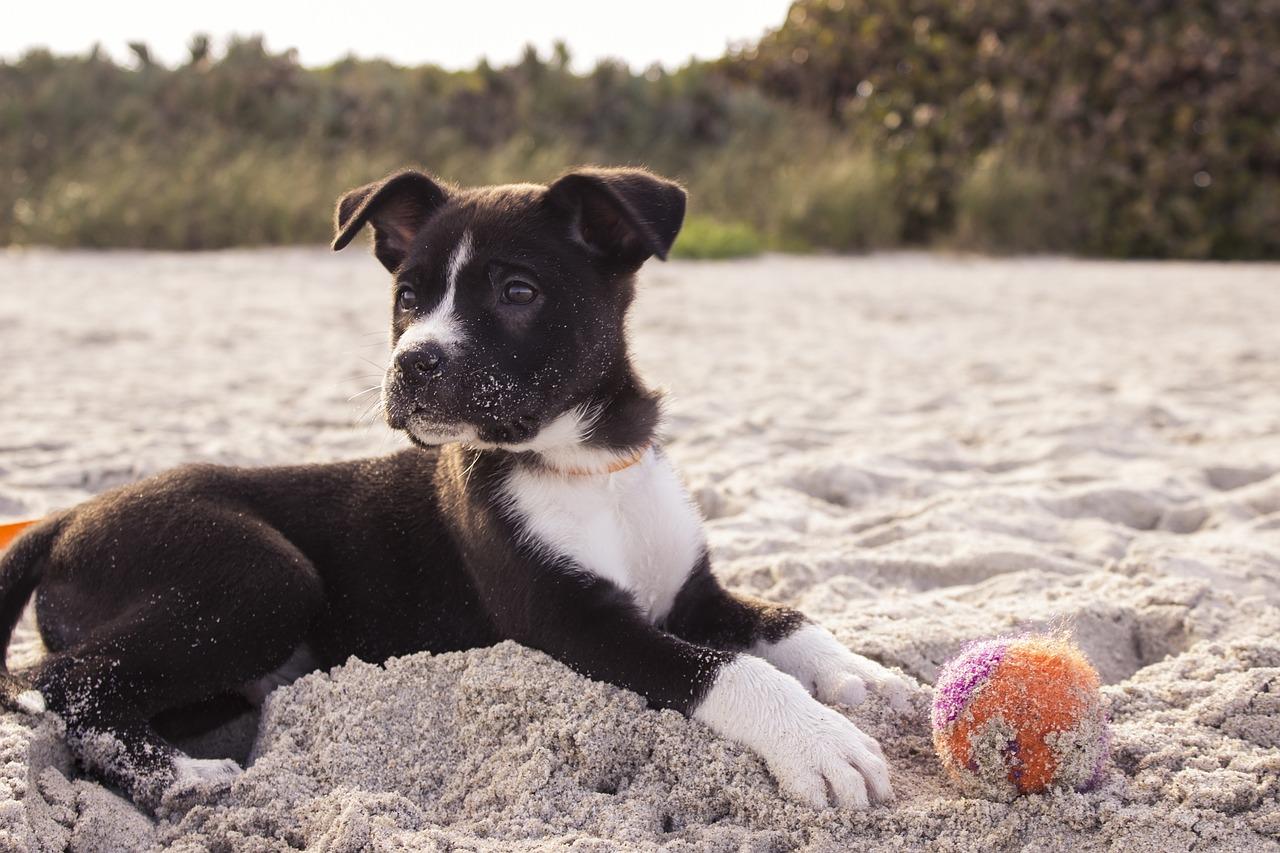 populonia spiagge per cani