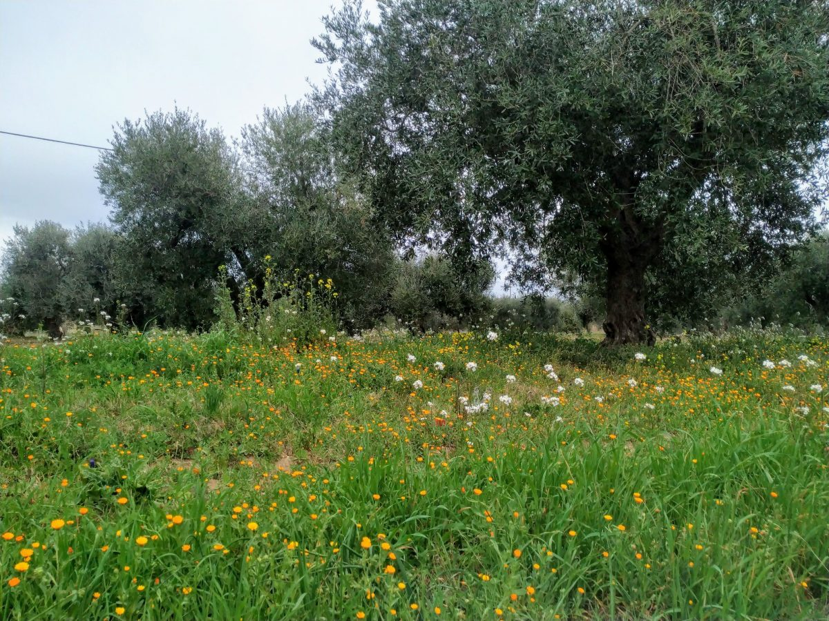 riserva basilicata