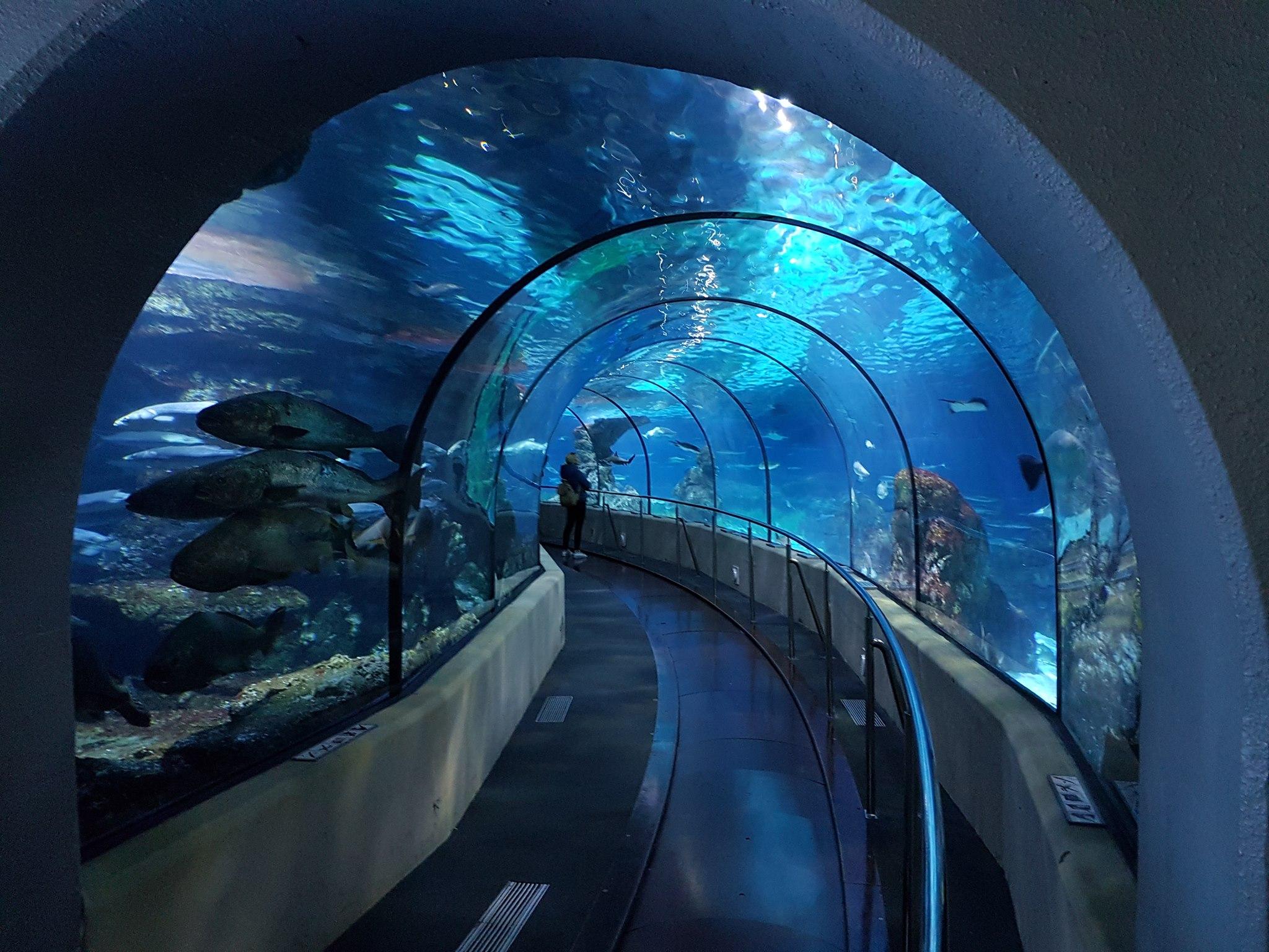 acquario di barcellona