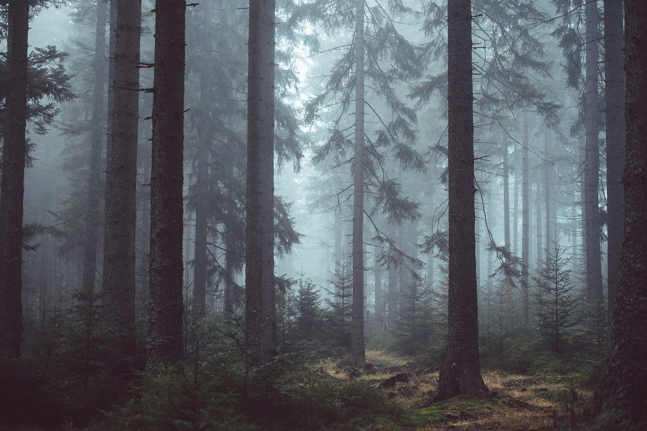 forest bathing trentino
