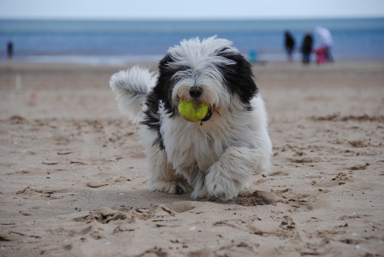 olbia spiagge per cani