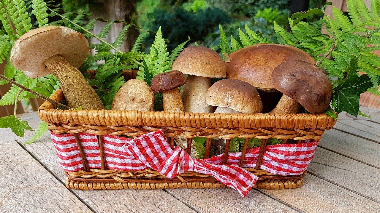 raccolta funghi 2020 friuli