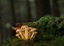 raccolta funghi 2020 lazio
