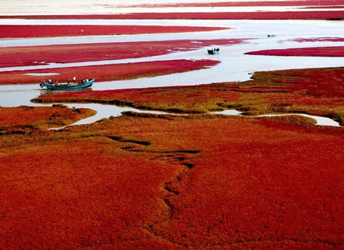 spiaggia rossa cina