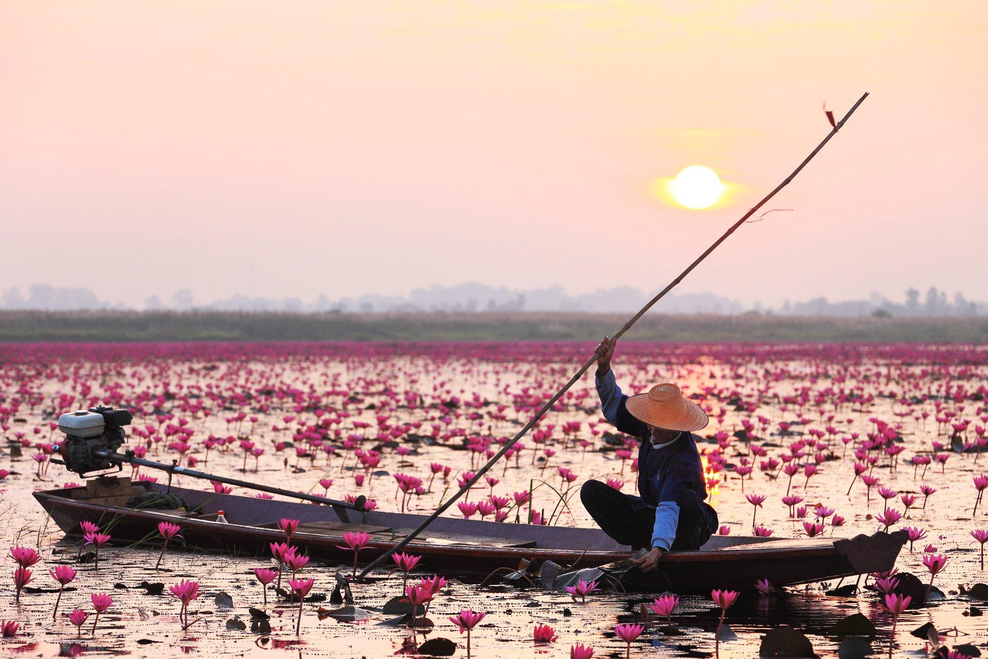 thailandia lago fiori di loto