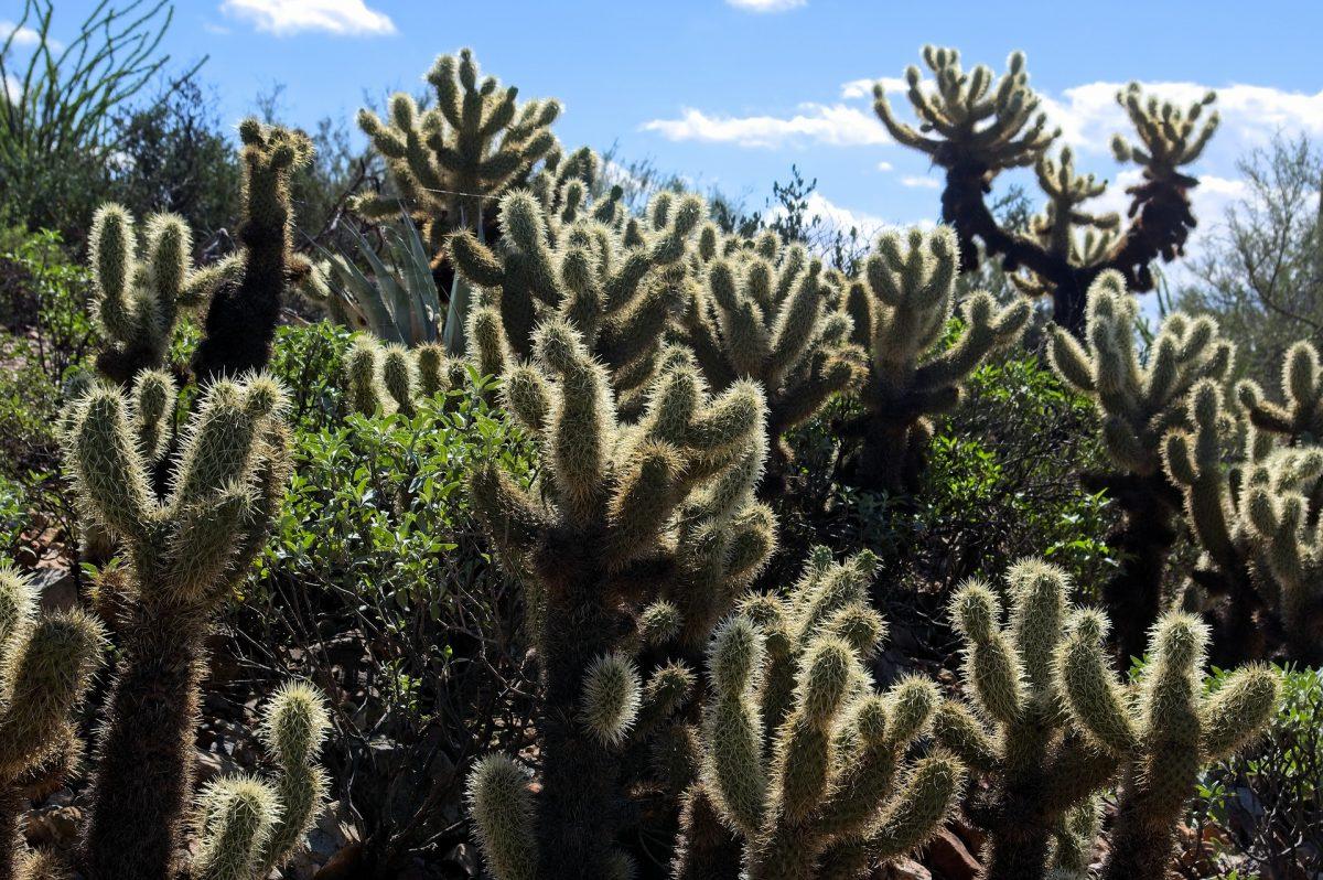 arizona deserto sonora