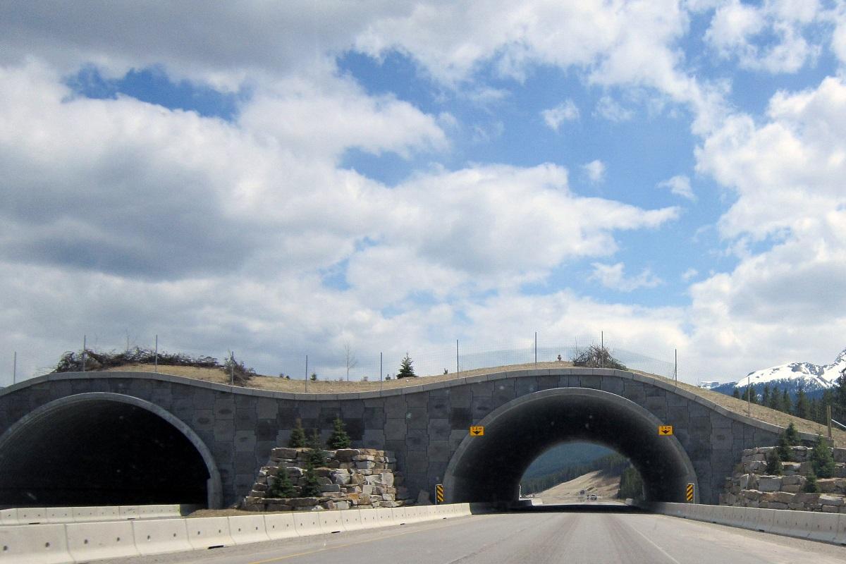 Banff Wildlife Bridges