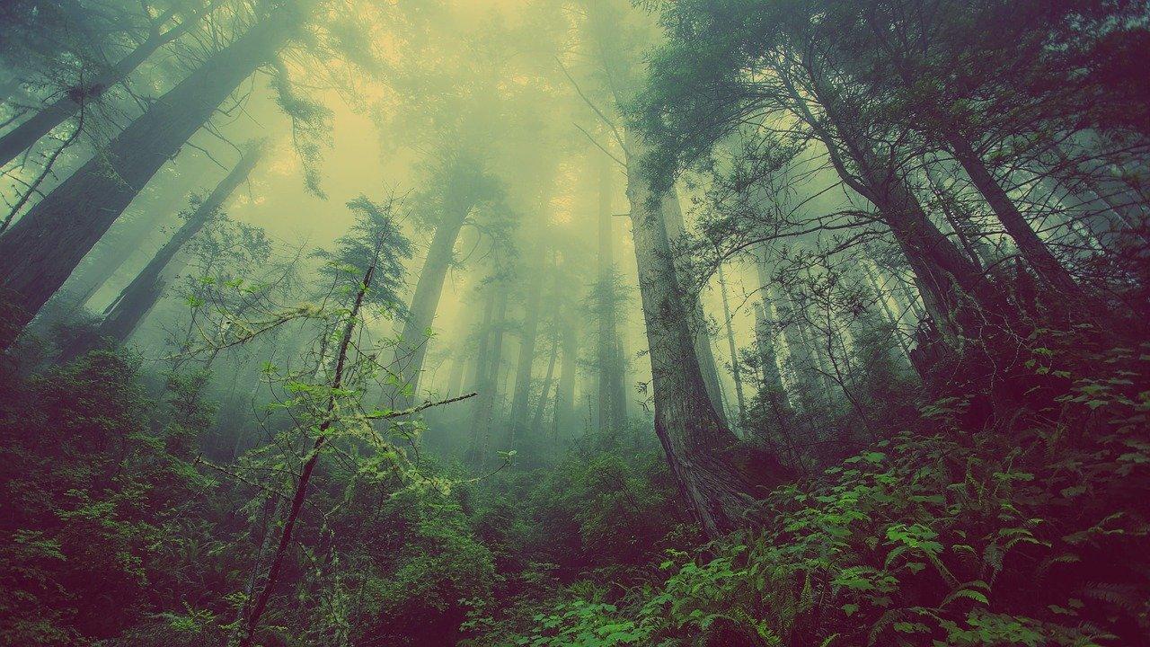 boschi più belli del mondo