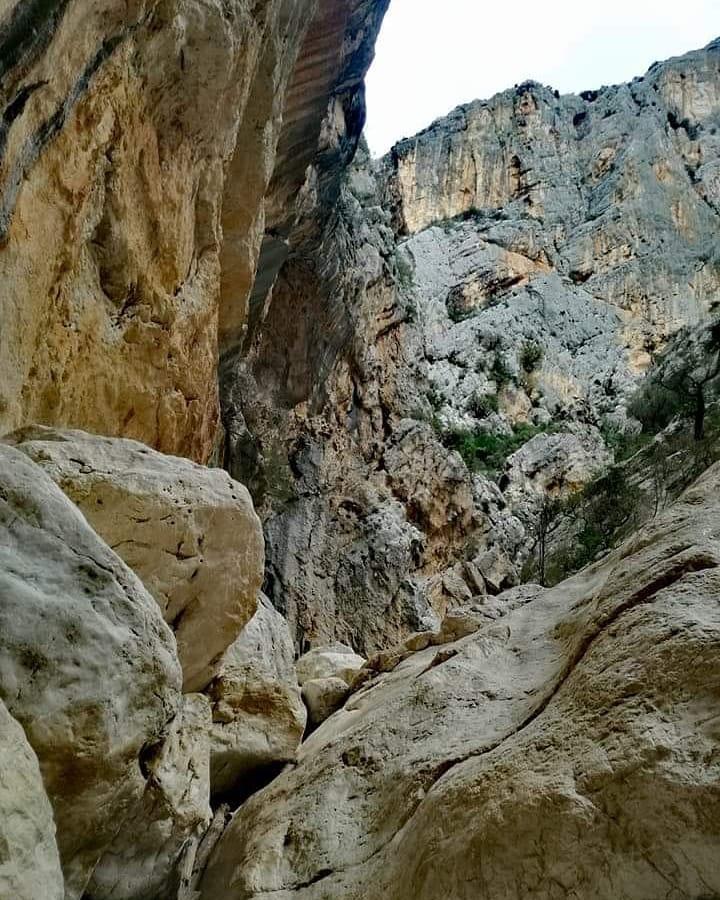 Canyon sardo