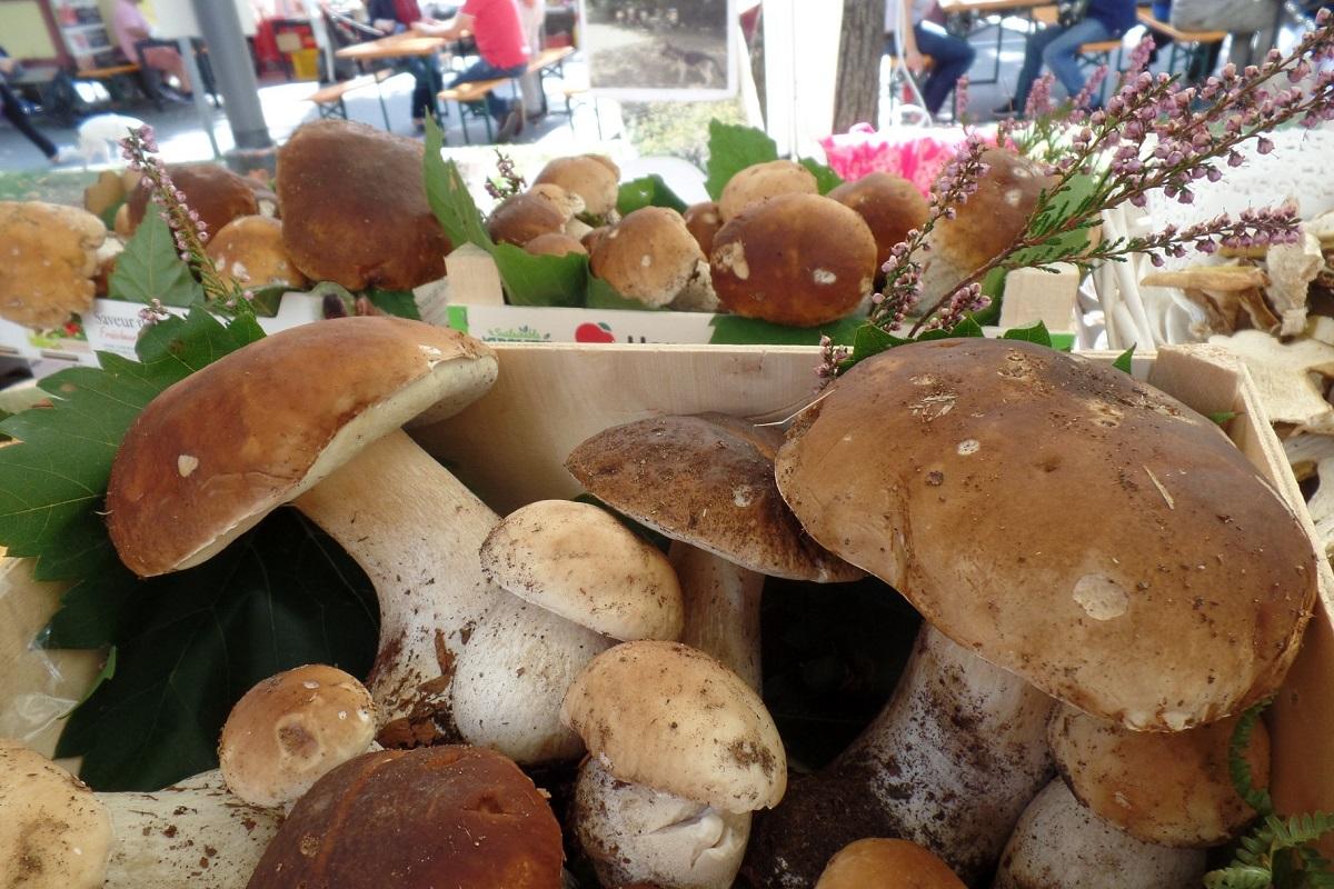 Festa del fungo porcino Borgo Val di Taro