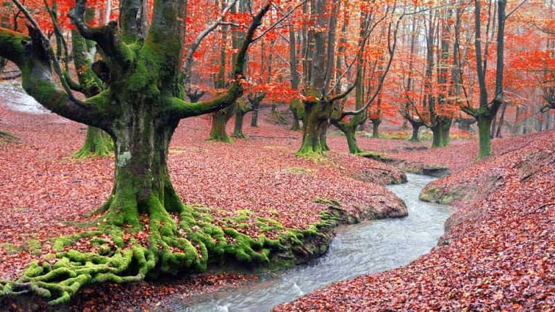 Foresta di Otzarreta