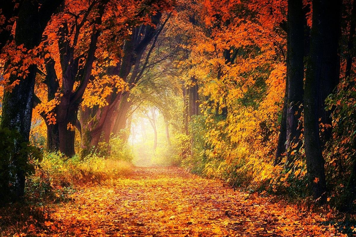 Foto instagrammabili autunno