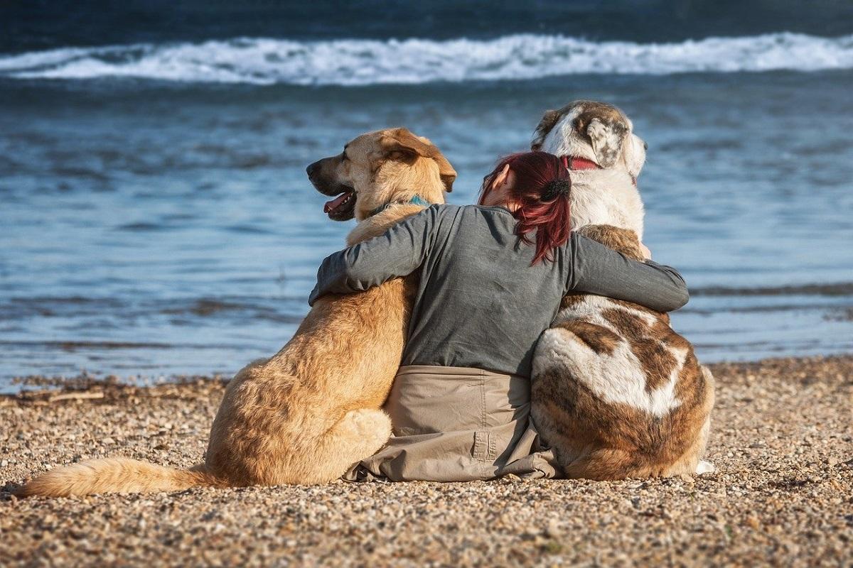 sarnico spiaggia per cani