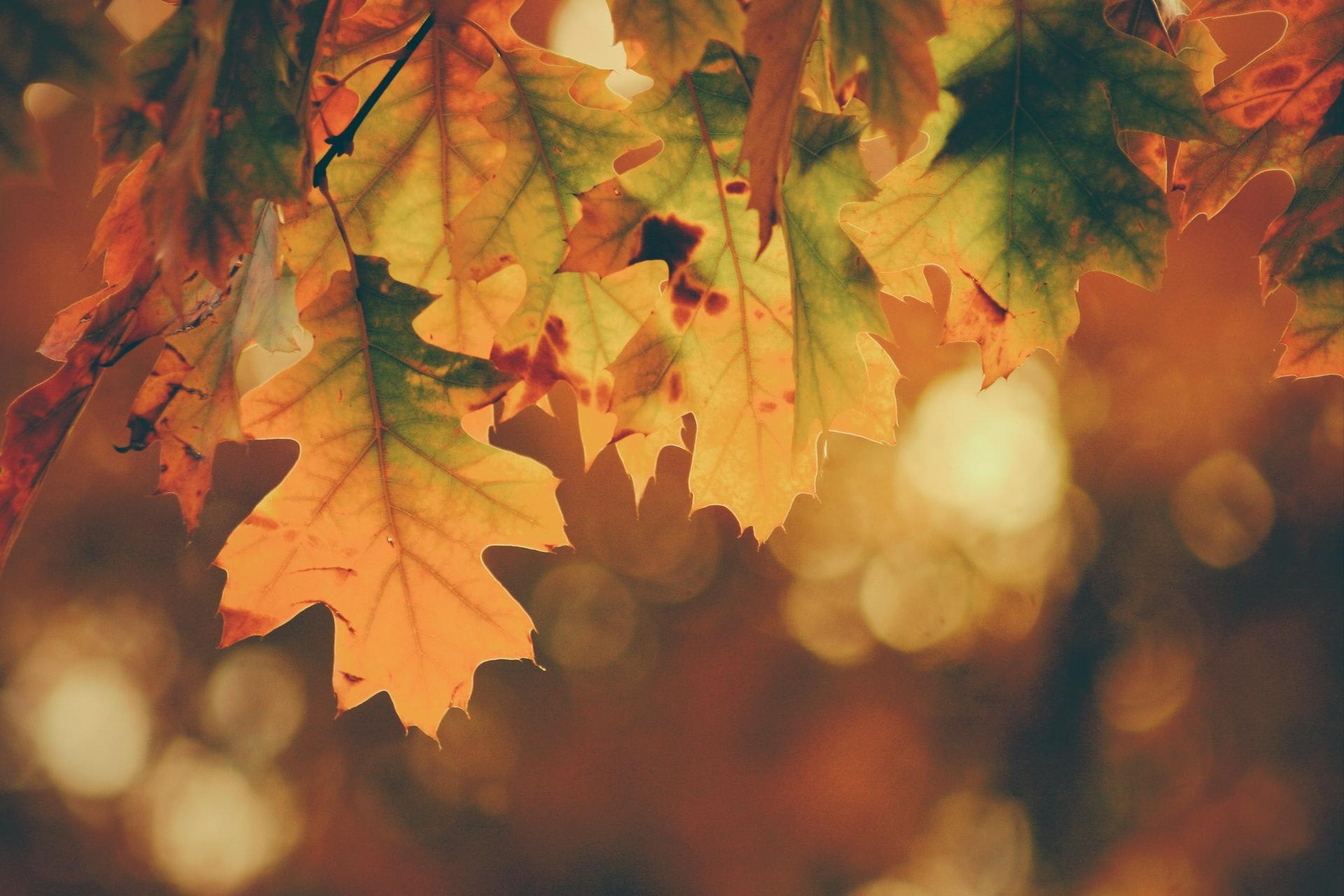 autunno fotografia