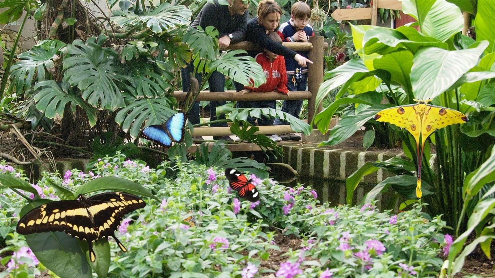 Bordano: Casa delle farfalle