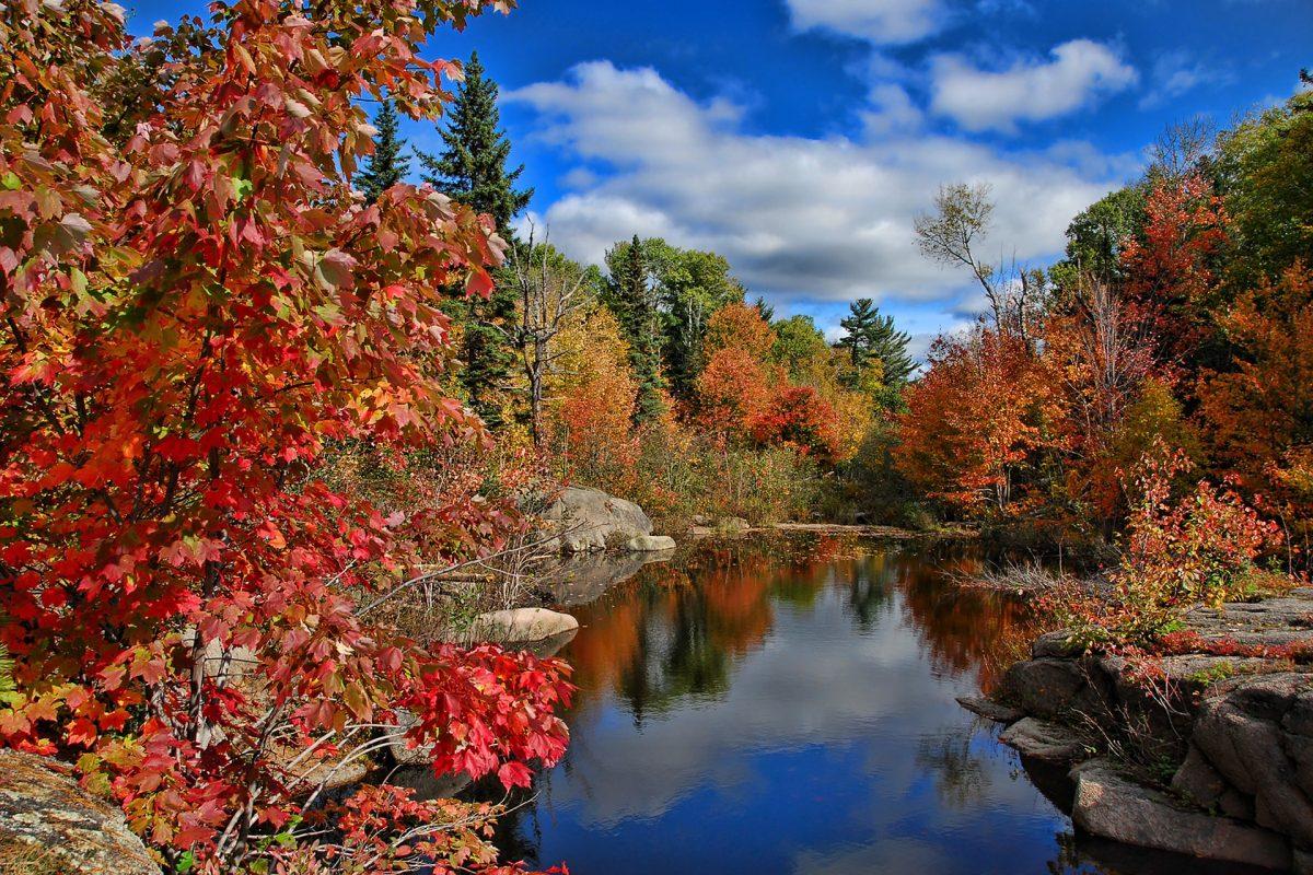 canada foliage