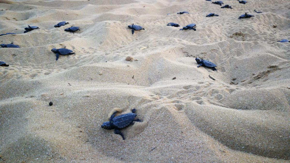 cilento tartarughe