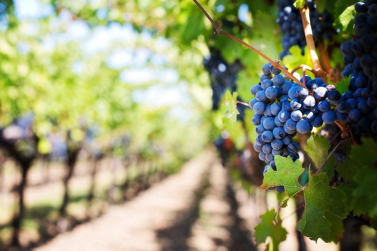 Elenco strade del vino Italia
