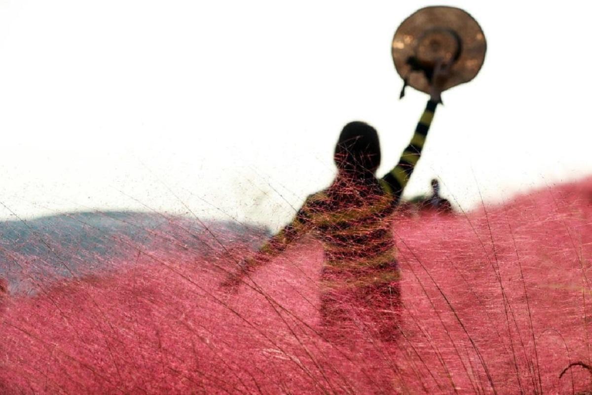 Erba rosa Cina
