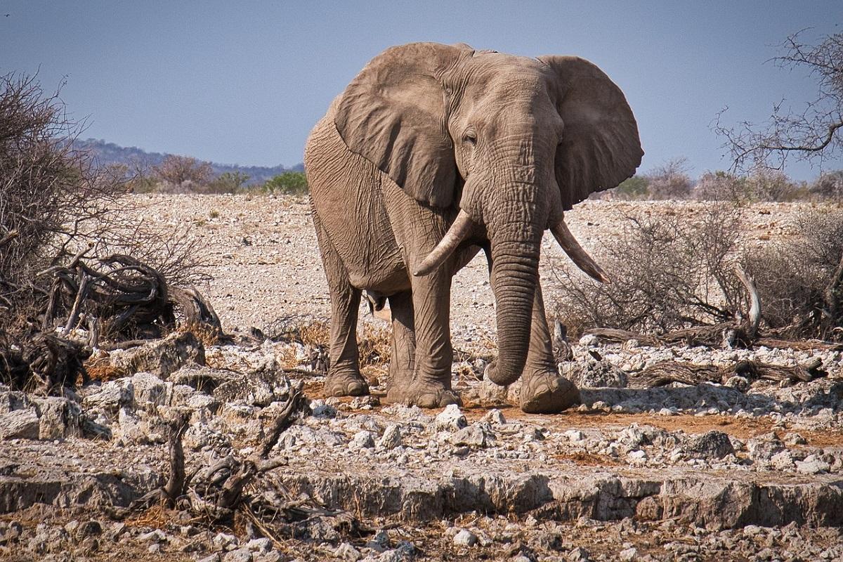 Etosha National Park safari