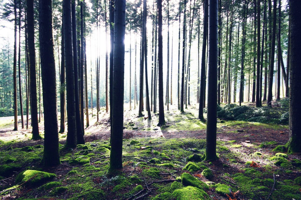 bosco trentino