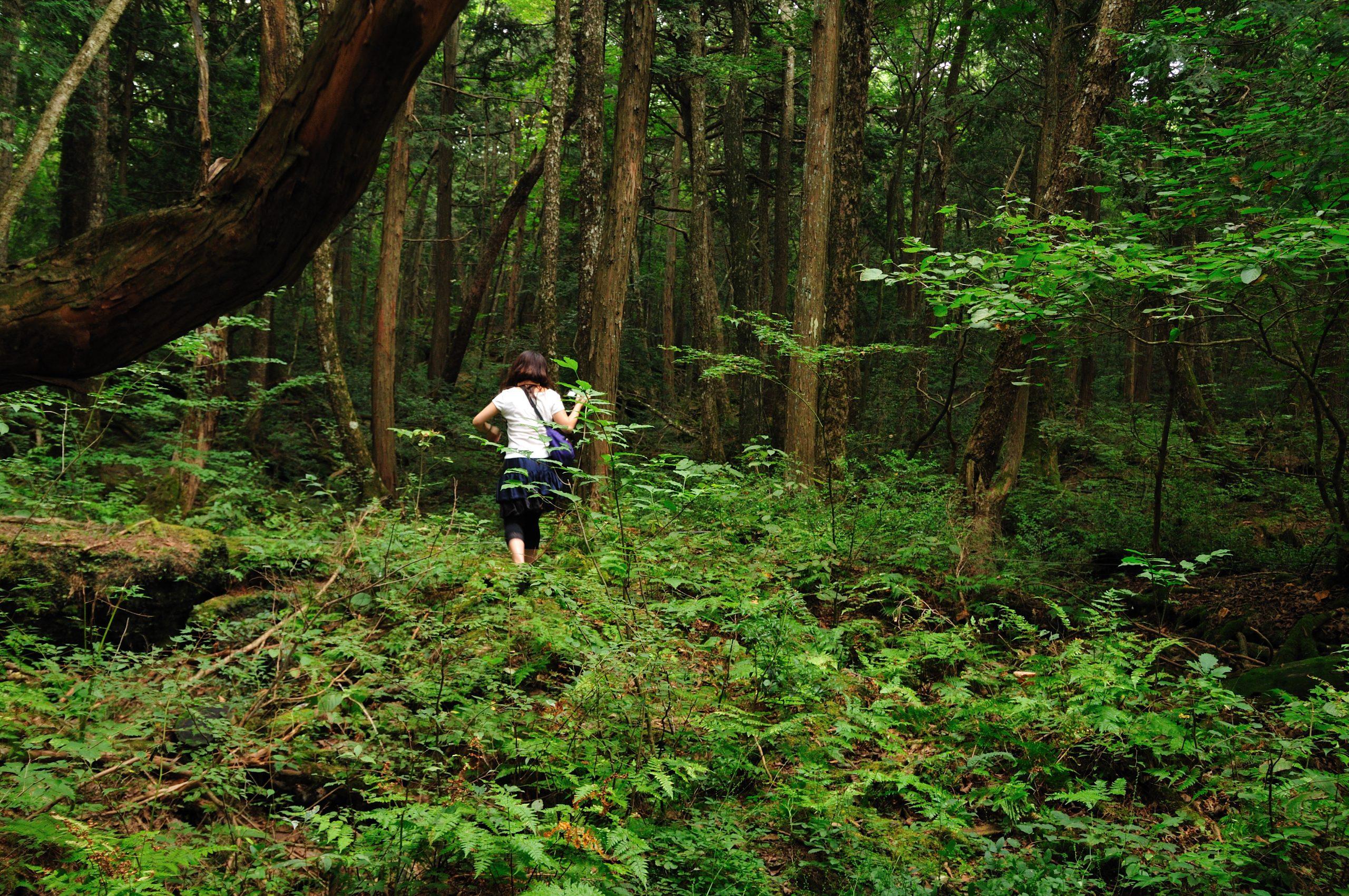 foresta dei suicidi giappone